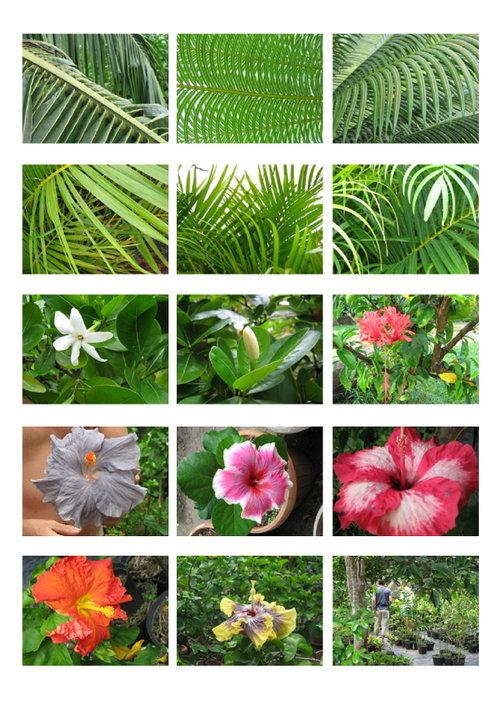 Tahiti_5