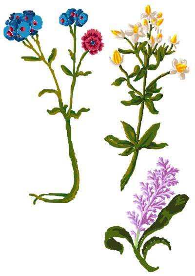 Fleurs_aux_feutres