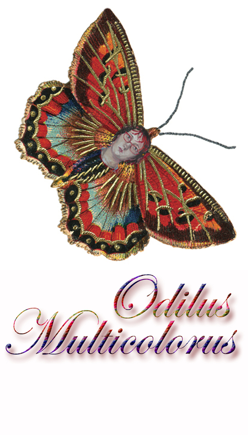 Papillon_odile_2